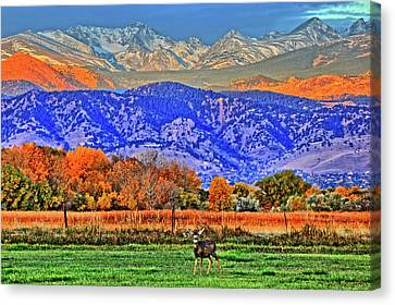 Canvas Print featuring the photograph Rocky Mountain Deer by Scott Mahon
