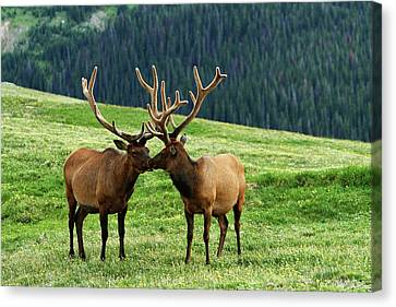 Canvas Print featuring the photograph Rocky Mountain Elk 2 by Marie Leslie