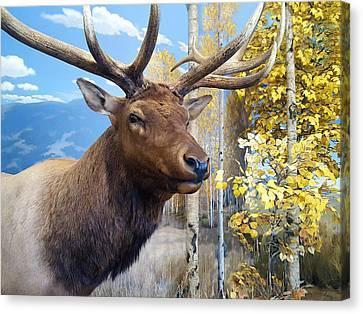 Canvas Print featuring the photograph Rocky Mountain Elk by Karon Melillo DeVega