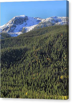 Canvas Print featuring the photograph Rocky Mountain Evergreen Landscape by Dan Sproul