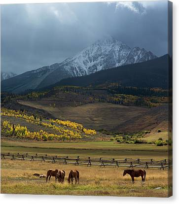 Canvas Print featuring the photograph Rocky Mountain Horses by Aaron Spong