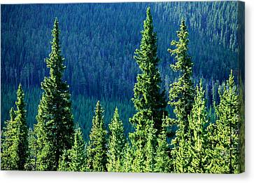 Rocky Mountain Skyline Canvas Print by Todd Klassy