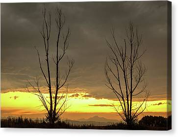 Canvas Print featuring the photograph Rocky Mountains Horizon Through The Trees by James BO Insogna