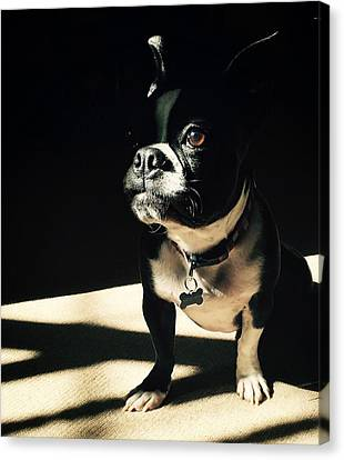 Canvas Print featuring the photograph Rocky by Sharon Jones