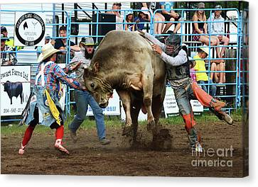 Rodeo Life 5 Canvas Print by Bob Christopher