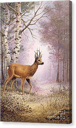 Roe Deer Canvas Print by Carl Donner
