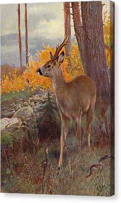 Tree Creature Canvas Print - Roe Deer by Wilhelm Kuhnert