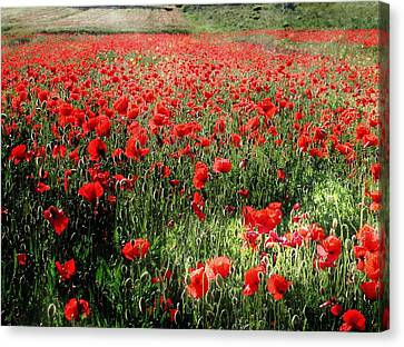 Rolling Fields With Poppies Canvas Print by Dorothy Berry-Lound
