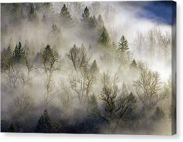 Rolling Fog In Sandy River Valley Canvas Print by David Gn