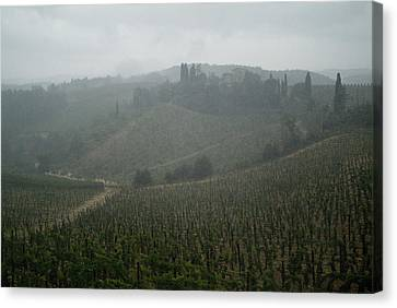 Rolling Hills Of Vineyards In Tuscany Canvas Print by Todd Gipstein