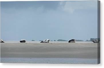 Canvas Print featuring the photograph Rolling Seals by Marc Philippe Joly