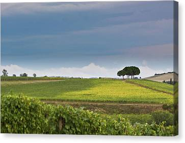 Rolling Tuscany 2 Canvas Print by Patrick English