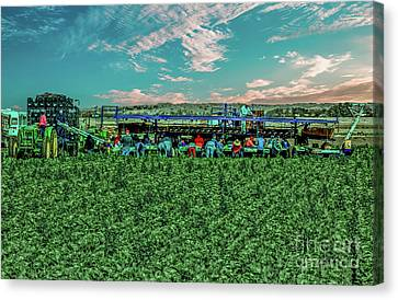 Romaine Canvas Print - Romaine Lettuce Harvest by Robert Bales