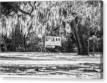 Canvas Print - Roman Candy Cart Under The Oaks - Bw by Scott Pellegrin