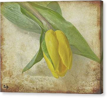Canvas Print featuring the photograph Romance by Traci Cottingham