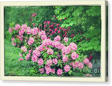 Sweet Touch Canvas Print - Romantic Rhododendrons by Carol Groenen