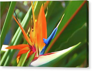 Landscape Canvas Print - Romantic Skies Bird Of Paradise by Aimee L Maher Photography and Art Visit ALMGallerydotcom