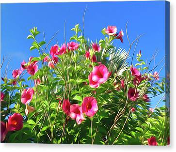 Romantic Skies Cherries Jubilee Allamanda Canvas Print