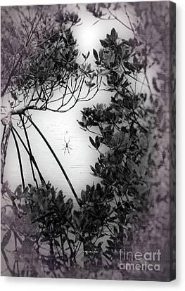 Canvas Print featuring the photograph Romantic Spider by Megan Dirsa-DuBois