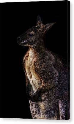 Roo Canvas Print by Martin Newman