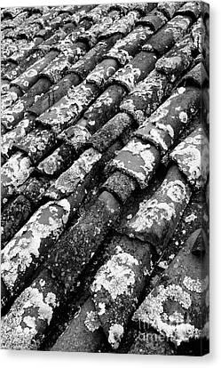 Roof Tiles Canvas Print by Gaspar Avila