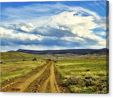 Room To Roam - Wyoming Canvas Print by L O C