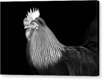 Rooster Canvas Print by Marion Johnson