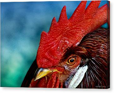 Rooster Canvas Print by Robert Lacy