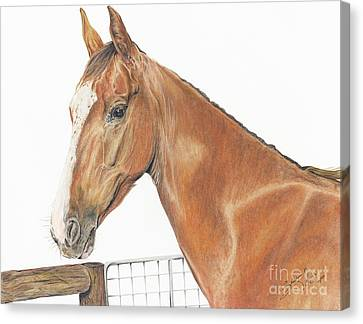 Rooster The American Saddlebred Canvas Print