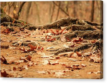 Roots Along The Path Canvas Print