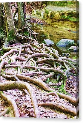 Roots And Rocks I Canvas Print by Anna Villarreal Garbis
