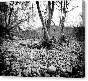 Canvas Print featuring the photograph Roots And Stones by Alan Raasch