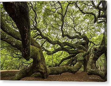 Roots Canvas Print by Bill Cantey