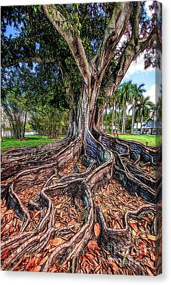 Figtree Canvas Print - Roots by David Lane