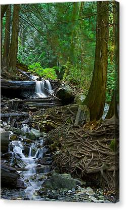 Roots Canvas Print by Naman Imagery
