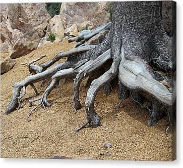 Roots Canvas Print by Ernie Echols
