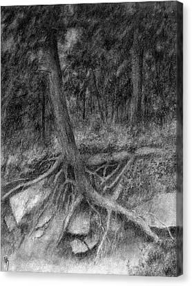 Roots II Canvas Print