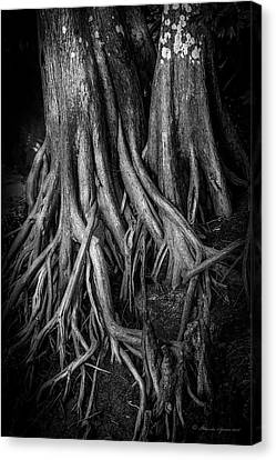 Roots Canvas Print by Marvin Spates