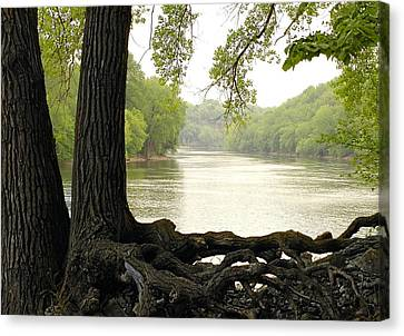 Tree Roots Canvas Print - Roots On The Mississippi by Jim Hughes