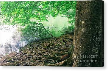 Roots On The River Canvas Print by Rachel Hannah