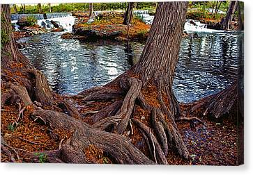 Roots On The River Canvas Print by Stephen Anderson
