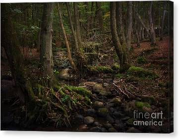 Roots Canvas Print by Rikard Strand