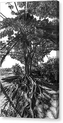 Tree Roots Canvas Print - Roots To Roof by Scott Campbell