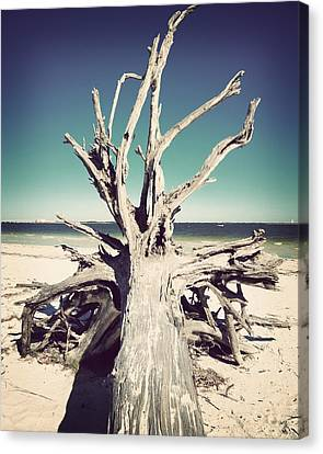 Roots To The Sky-vintage Canvas Print by Chris Andruskiewicz