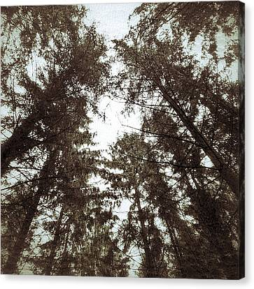 Canvas Print featuring the photograph Rorschach Trees by Karen Stahlros