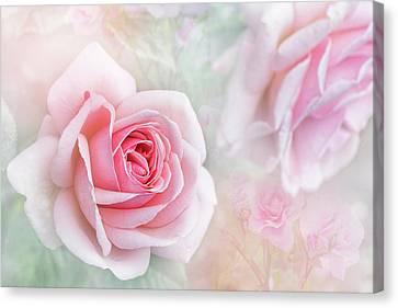 Rosa 'aphrodite' Canvas Print by Jacky Parker