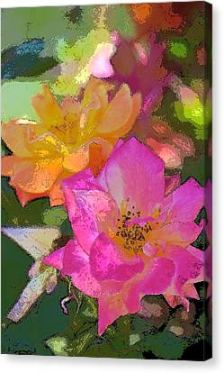 Rose 114 Canvas Print by Pamela Cooper