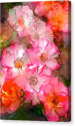 Rose 140 Canvas Print by Pamela Cooper
