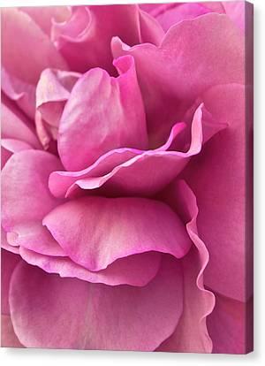 Rose Affair Canvas Print by Gwyn Newcombe