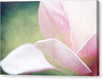 Rose And Pearl Colors Of A Bloom Canvas Print by Toni Hopper